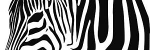 radiadores zebra automotores | servicios en tucumán 415, villa mercedes, san luis